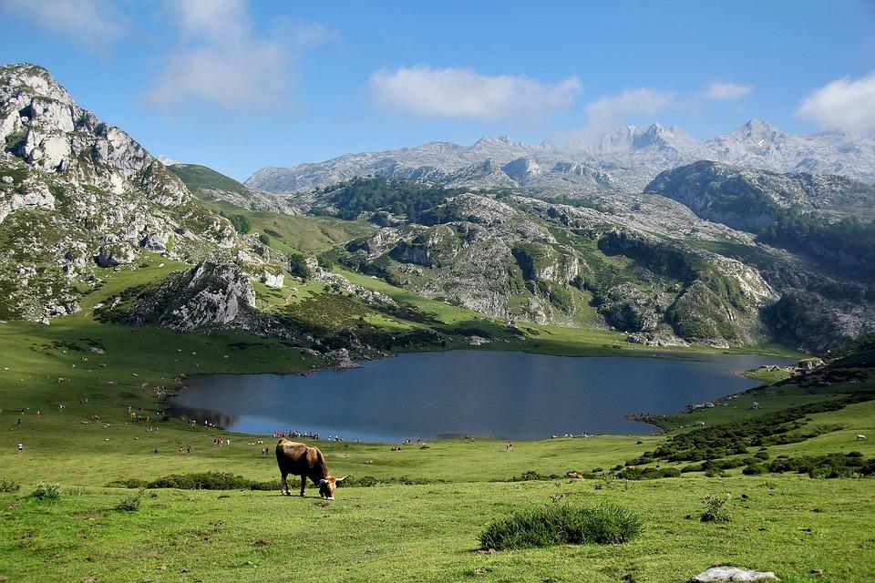 Ternera asturiana, una raza de sabor único
